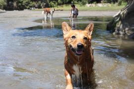 pet rehabilitation Auckland